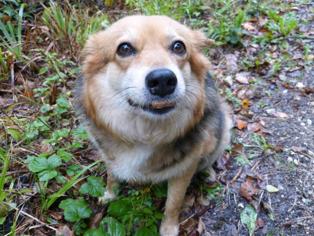 hund ser paa mens den spiser 1024x768